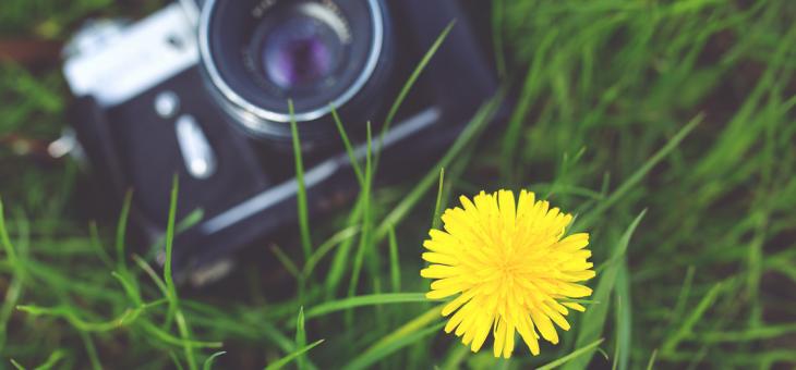 Crea sorprendentes sliders con imágenes, texto y ¡transiciones!
